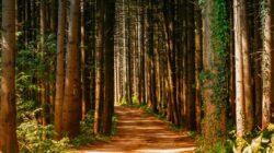 Kewajiban Manusia Terhadap Hutan, Sungai, Hewan dan Pohon
